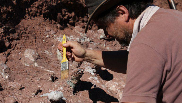 hallazgo-dinosaurio-gigante-neuquen-2012-2jpg